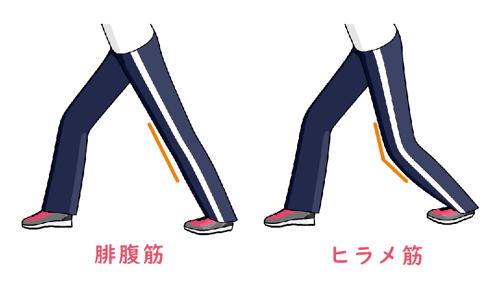 腓腹筋とヒラメ筋のストレッチ方法の違いを示した図